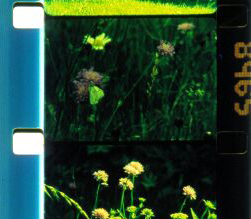 impakt_bouquet30.jpg